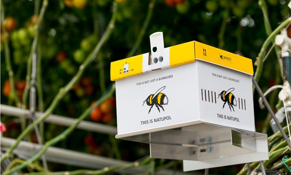 Unichem bees