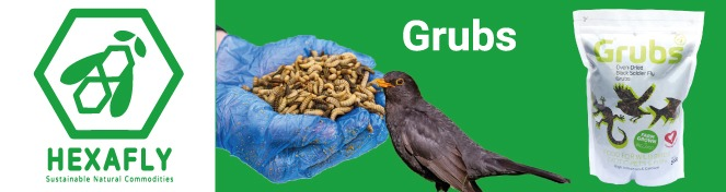 High_quality_grubs_for_wild_birds